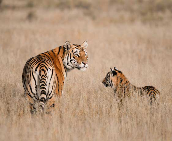 Wild Heart of India: Indian Wildlife Safari Small Group Tour