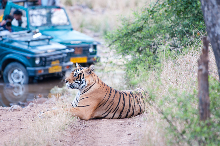 Indian Wildlife Safari Group tour - Wild Heart of India Mantra Wild