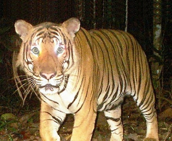 Camera Trap Programme in Corbett Tiger Reserve