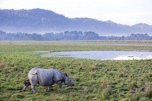 TOP 10 MUST SEE NATIONAL PARKS IN INDIA