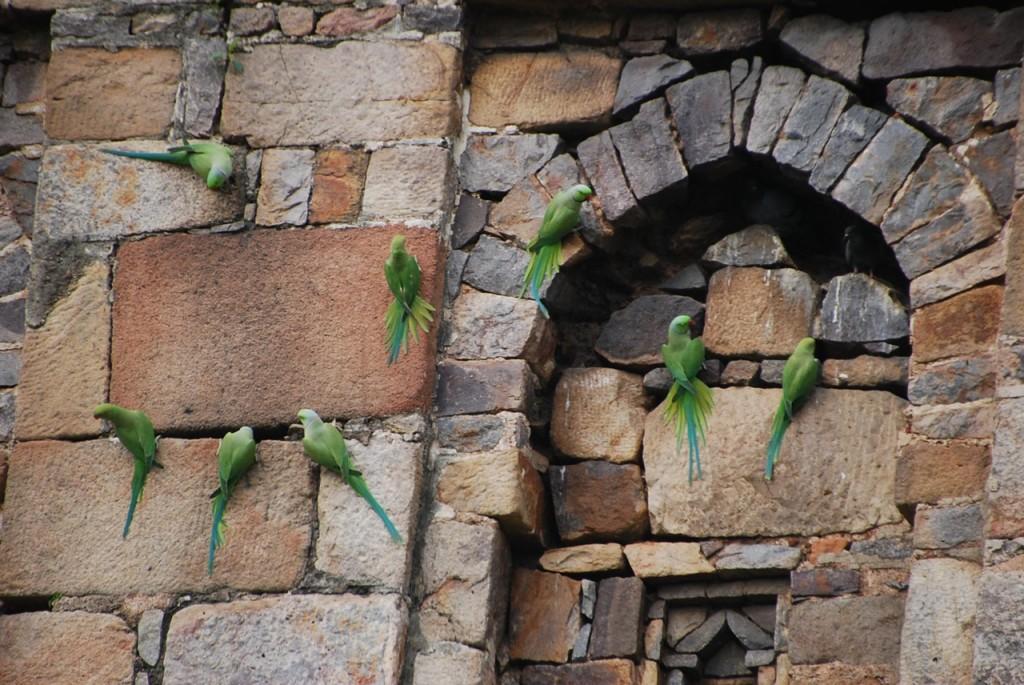 Lodhi Gardens, by Julie Miller