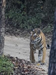 Mantra Big 5 Wildlife Safari