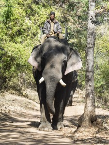 Mantra Big 5 Mantra Wild
