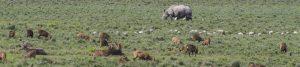 Wildlife Safari India Mantra Wild