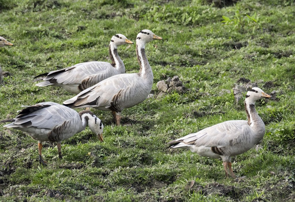 Mantra Big 5 Wildlife Safari tour