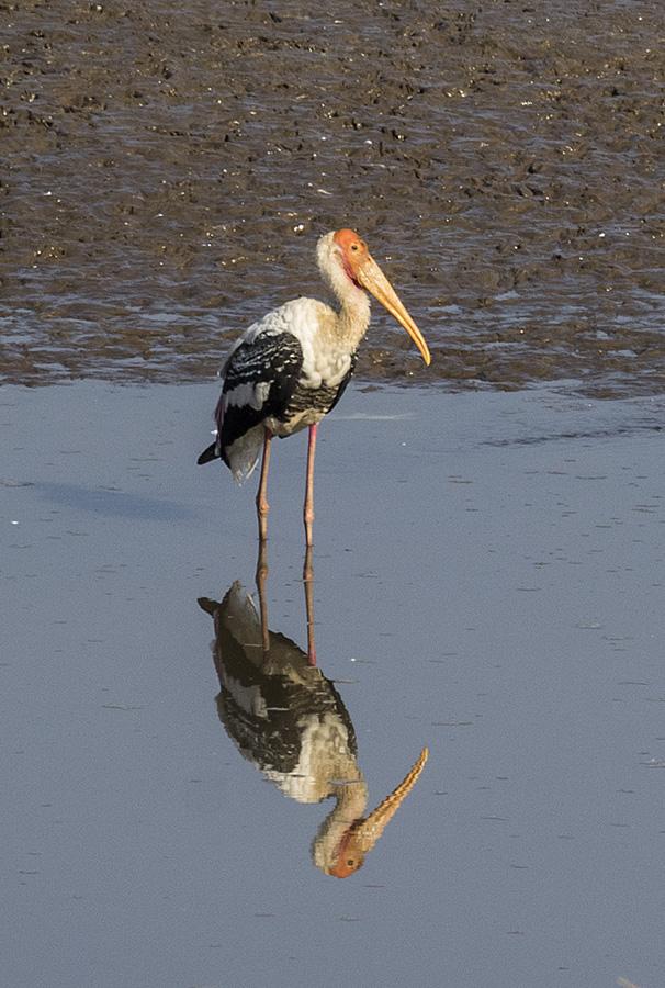 Mantra Big 5 Wildlife Safari and birding tours