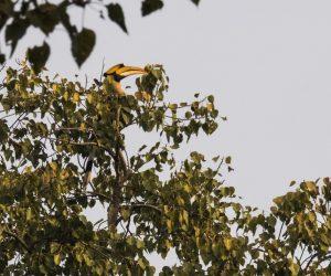Mantra Big 5 Birding tours