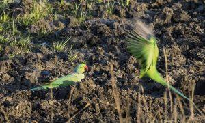 Mantra Big 5 India Wildlife Safari birding tours