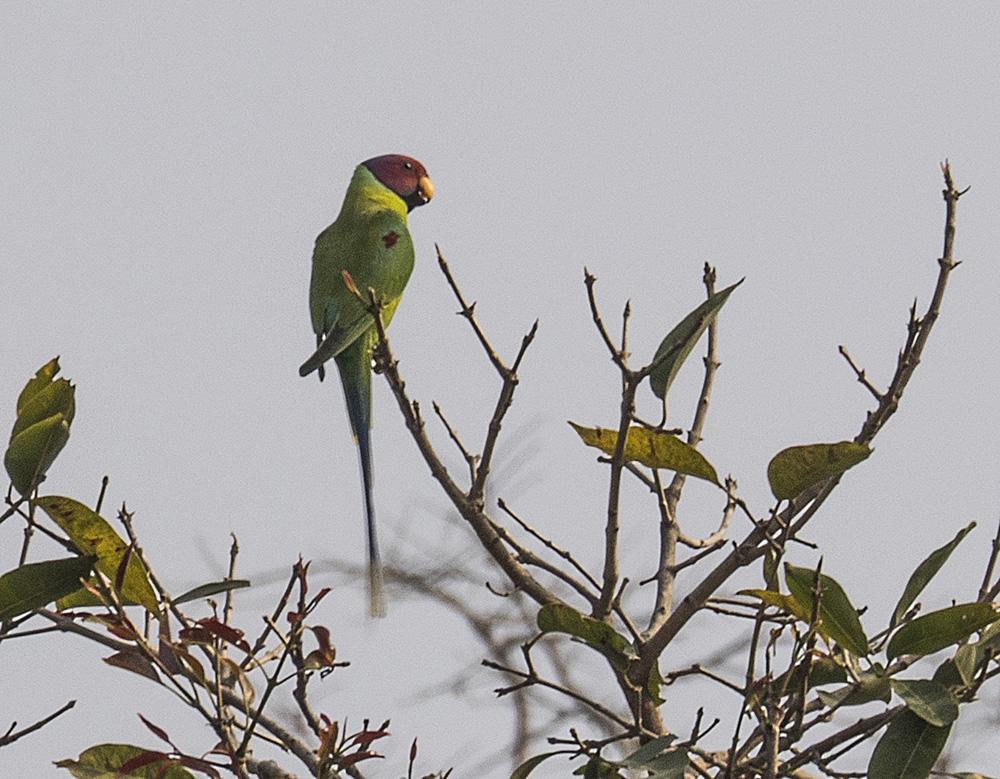 Mantra Wild Adventures Birding tours