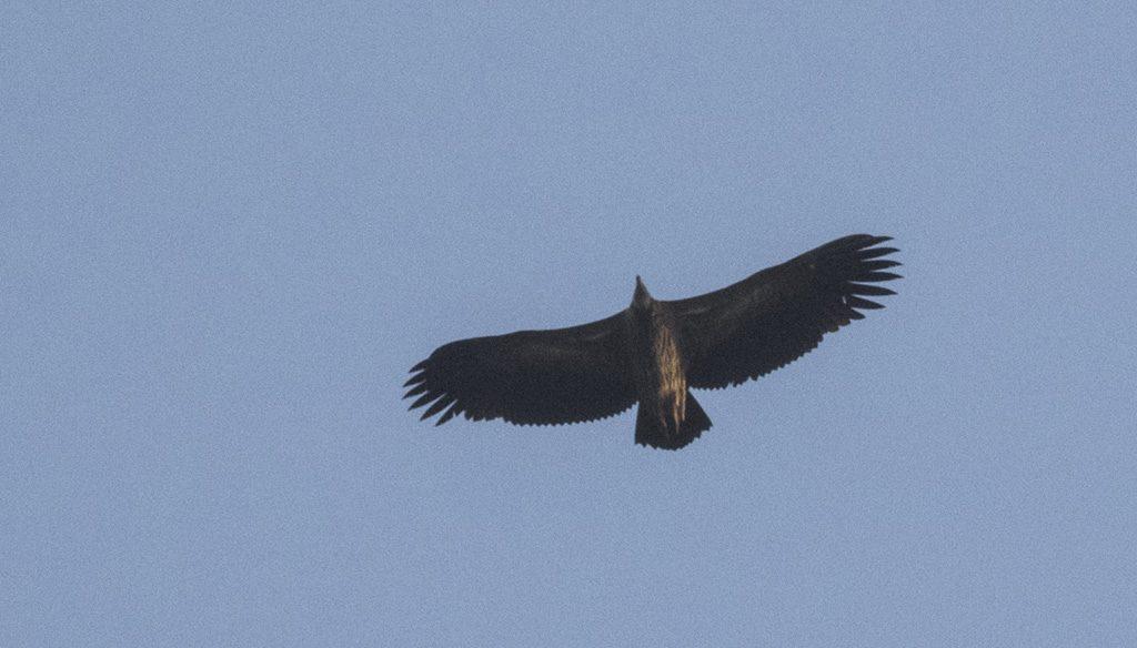 Mantra Wild adventures Wildlife safari and birding tours