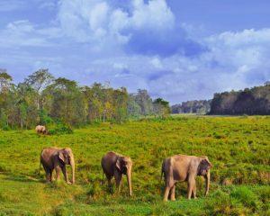 Mantra Wild Chitwan Safari experience