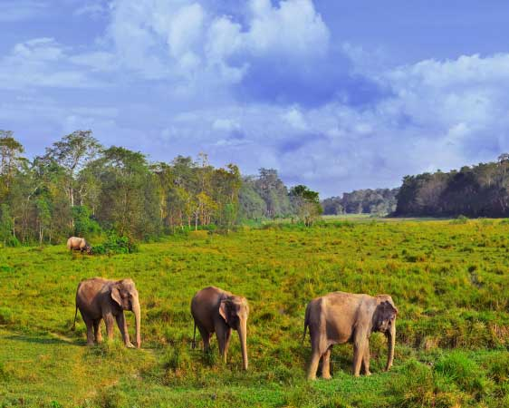 Nepal Safari Experience 6 Nights / 7 Days (PRIVATE TOUR)