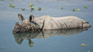 Chitwan National Park tours Mantra Wild Adventures