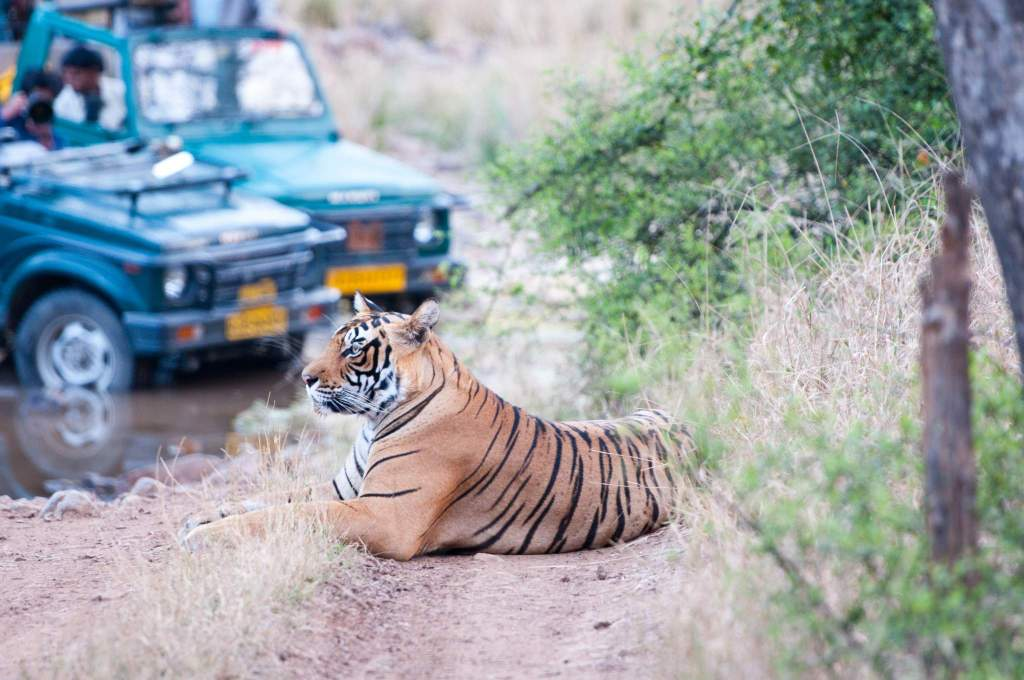 wildlife safari holidays mantra wild
