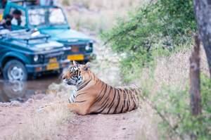 wildlife safari holidays mantra wild