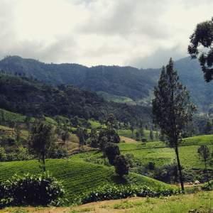 Munnar Kerala Mantra Wild