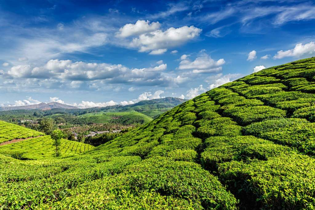 10 Reasons to Visit Kerala. Munnar Tea Tours Mantra Wild