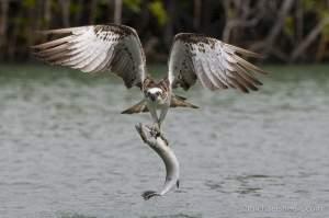 Wildlife Safari photo tour