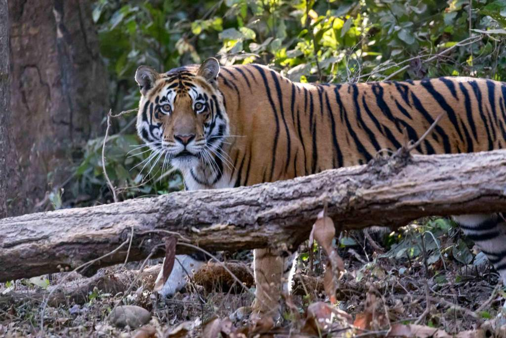 Wild Heart of India Small Group Safari Tour