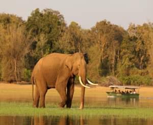 India Wildlife Photo Safari Tour
