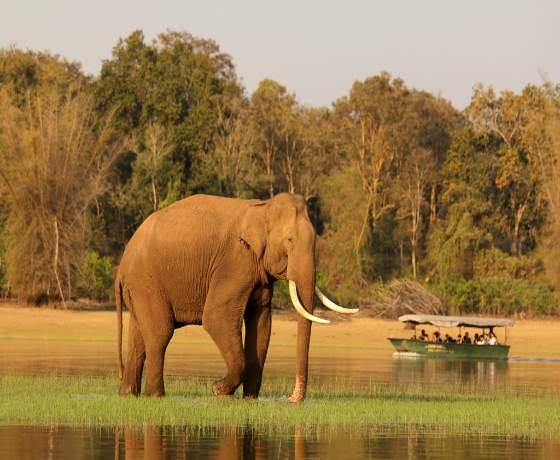 13 Day India Wildlife Photo Safari Group Tour