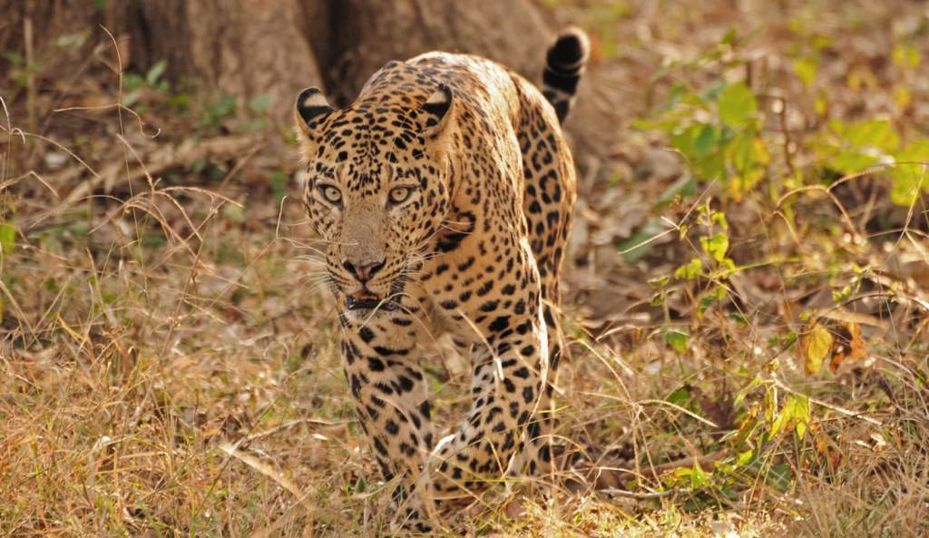 India Wildlife Tiger Safari Group tour