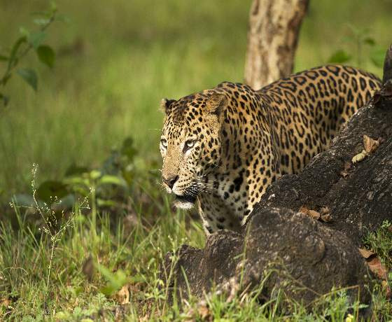 Wild Heart of India: Indian Wildlife Safari Private Tour