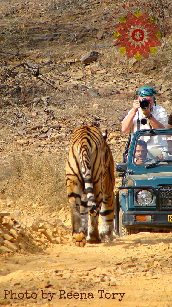 India Wildlife Photo Safari Tour