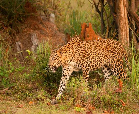 11 Day Wild Sri Lanka Photo Safari (Group Tour)