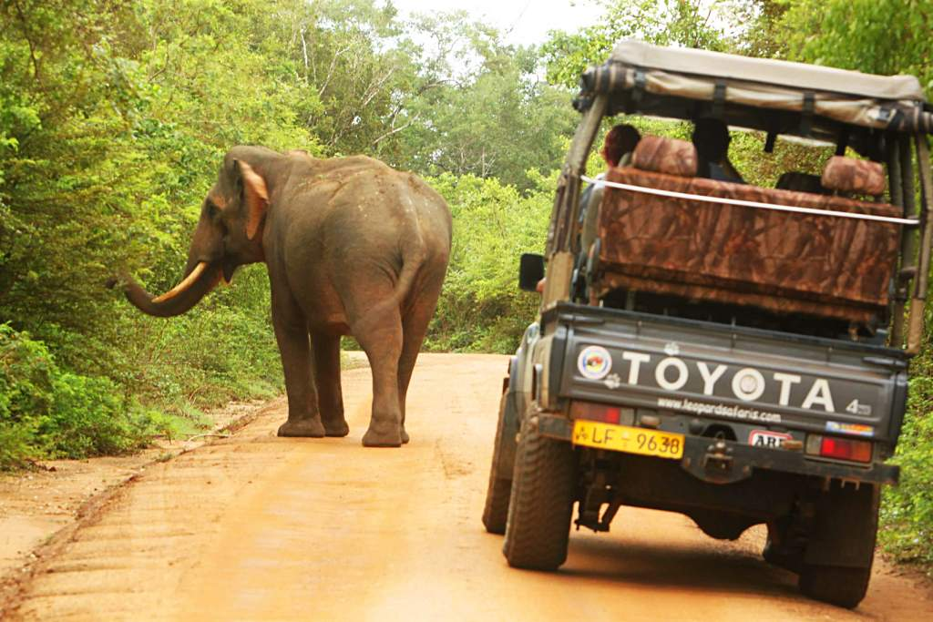 Wild Sri Lanka Photo safair tour tour